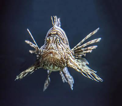 Photograph - Lionfish Portrait by William Bitman