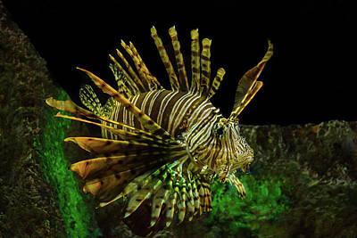 Photograph - Lionfish by Richard Goldman