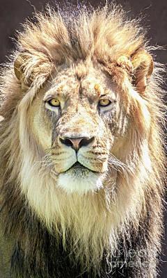 Photograph - Lions Mane by David Millenheft
