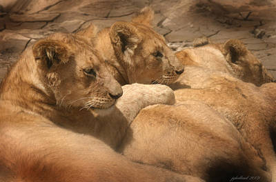 Photograph - Lions Of Serengeti by Joseph G Holland