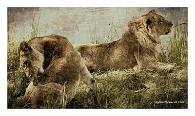 Digital Art - Lions On River Bank by RayZa Photography