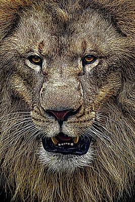 Lion Face Photograph - Lion's Pride by Janet Fikar