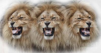 Digital Art - Lions Roar by Jim Fitzpatrick