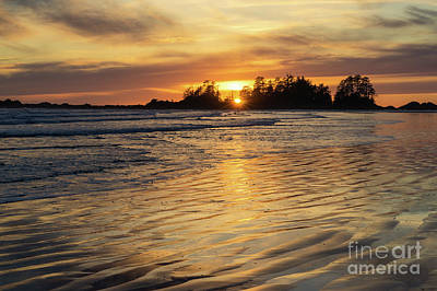 Photograph - Liquid Gold by Carrie Cole