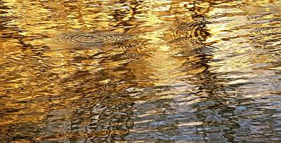 Photograph - Liquid Gold by Gwendolyn Christopher