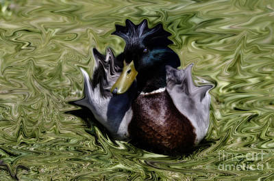 Liquid Mallard Art Print by Donna Greene