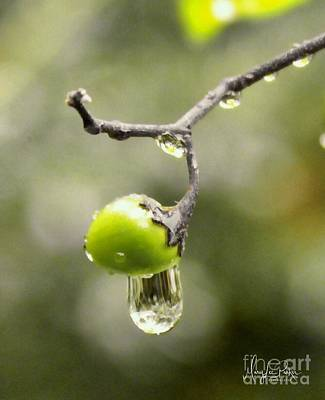 Photograph - Liquid Sunshine by MaryLee Parker