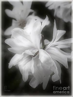 Photograph - Lisa by Elaine Teague