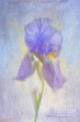 Photograph - Lisa's Iris by Linda Blair
