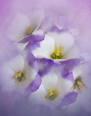 Photograph - Lisianthus Grouping by David and Carol Kelly