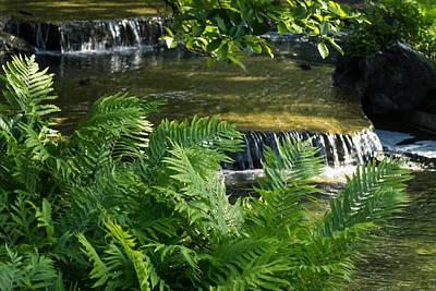 Delicately Photograph - Listen To The Babbling Brook - Green Summer Zen by Georgia Mizuleva