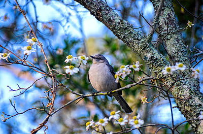 Photograph - Listen To The Mockingbird by Linda Brown