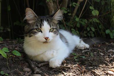 Listening Cat Original by Rachel Hughes