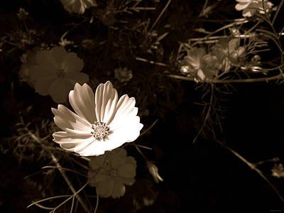 Photograph - Lit by Brenda Conrad