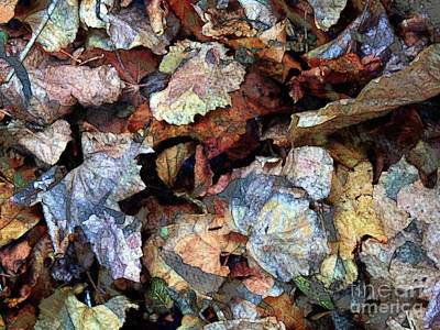 Photograph - Litter Of Leaves by Robert Ball