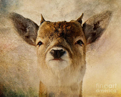 Photograph - Little Antlers by Heather King