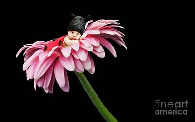 Photograph - Little Baby Ladybug by Gualtiero Boffi