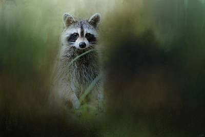 Raccoon Photograph - Little Bandit by Jai Johnson