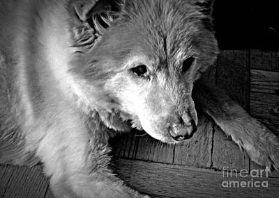 Photograph - Little Bear In Old Age 2 by Sarah Loft
