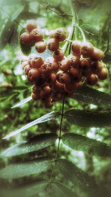 Photograph - Little Berry by YoursByShores Isabella Shores