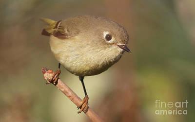 Photograph - Little Bird by Debbie Parker