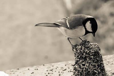 Little Bird Feeding Art Print