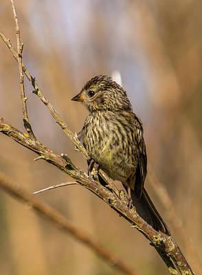 Juvenile Wall Decor Photograph - Little Bird On Little Branch by Marv Vandehey