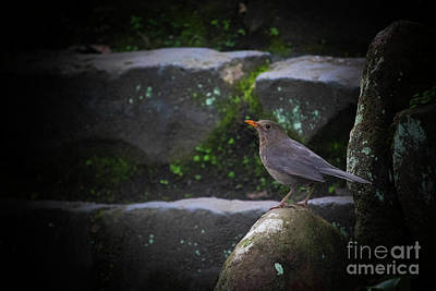 Photograph - Little Bird On The Rock by Naomi Burgess
