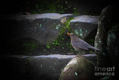 Photograph - Little Bird On The Rock by Naomi Burgess