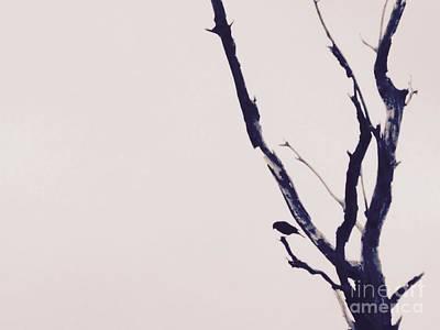 Photograph - Little Bird by Tim Good