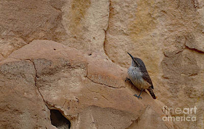 Photograph - Little Bird Upon The Cliff Face by Debby Pueschel
