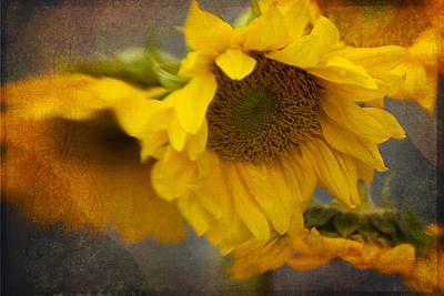 Photograph - Little Bit Of Sunshine by Beverly Stapleton