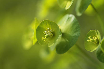 Contemplative Photograph - Green Power by Connie Handscomb