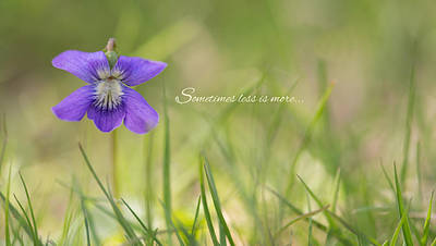 Photograph - Little Bloom by Robin-Lee Vieira