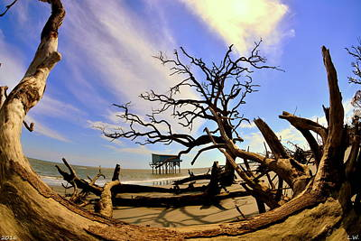 Photograph - Little Blue And Driftwood Beach Hunting Island Beaufort Sc by Lisa Wooten