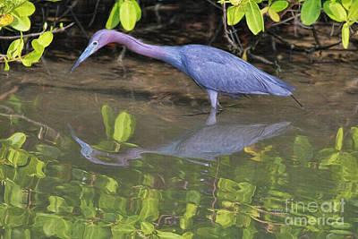 Painting - Little Blue Fishing by Deborah Benoit