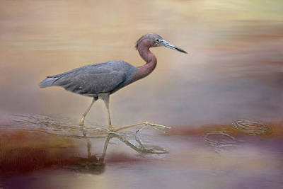 Photograph - Little Blue Heron by Donna Kennedy