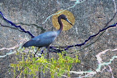 Photograph - Little Blue Heron In Abstract by rd Erickson