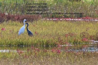 Photograph - Little Blue Heron In Red by Captain Debbie Ritter