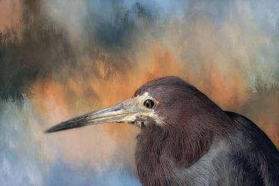 Little Blue Heron Art Print by Kim Hojnacki