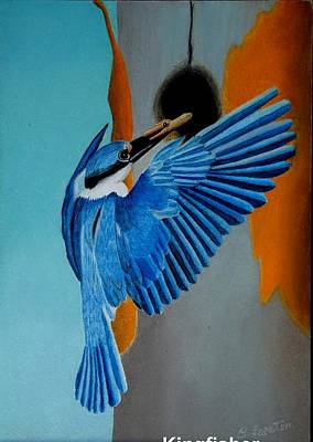 Realism Photograph - Little Blue Kingfisher by Brian Leverton