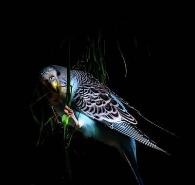 Lovebird Digital Art - Little Boy Blue by Richard Sayer