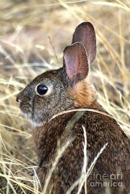 Digital Art - Little Brown Bunny Closer by Nick Gustafson