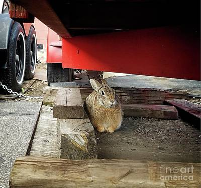 Photograph - Little Bunny by Jon Burch Photography