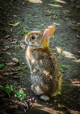 Photograph - Little Bunny by Lilia D