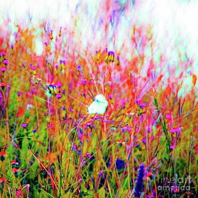 Art Print featuring the photograph Little Butterfly Fly by D Davila
