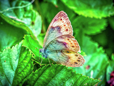 Photograph - Little Butterfly by Lilia D