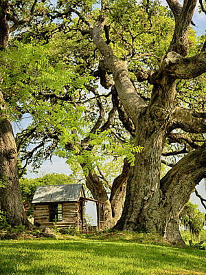 Photograph - Little Cabin by Charles McKelroy