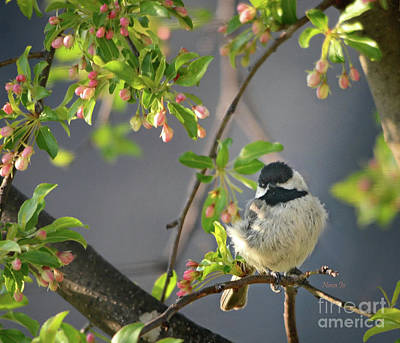 Photograph - Little Chickadee In The Pink by Nava Thompson