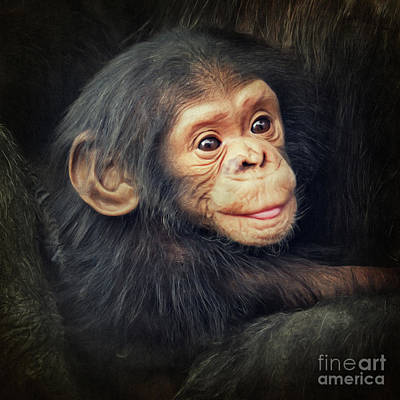 Chimpanzee Mixed Media - Little Chimpanzee by Angela Doelling AD DESIGN Photo and PhotoArt